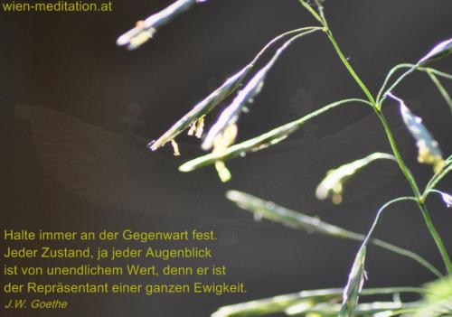 Goethe Zitat